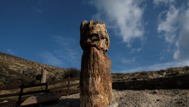 Scientists in Greece find 20 million-year-old petrified tree