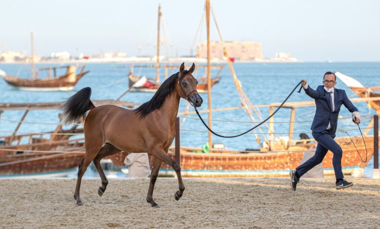 Katara Title Show Contest Kicks Off
