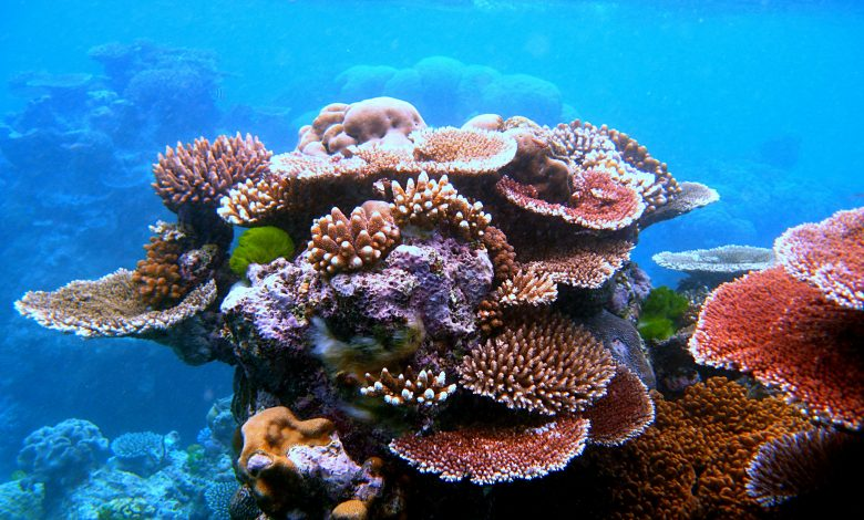 MME Forms Team to Study Protection of Concrete Structures and Artificial Coral Reefs