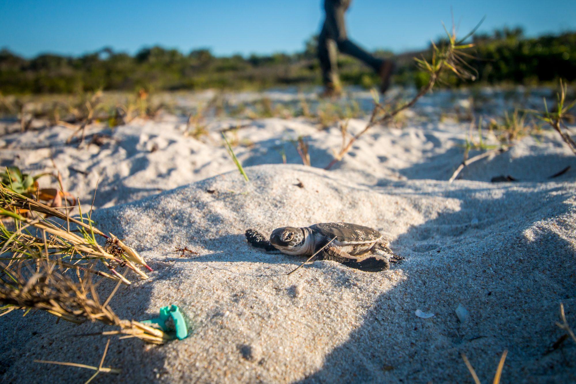 MME Launches Campaign to Rehabilitate Fuwairit Beach