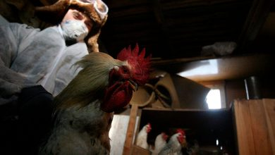 Russia Confirms First Case of Human Infection with H5N8 Strain of Bird Flu