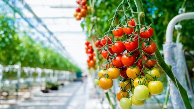 Qatar's 8th International Agricultural Exhibition to Launch Next Tuesday