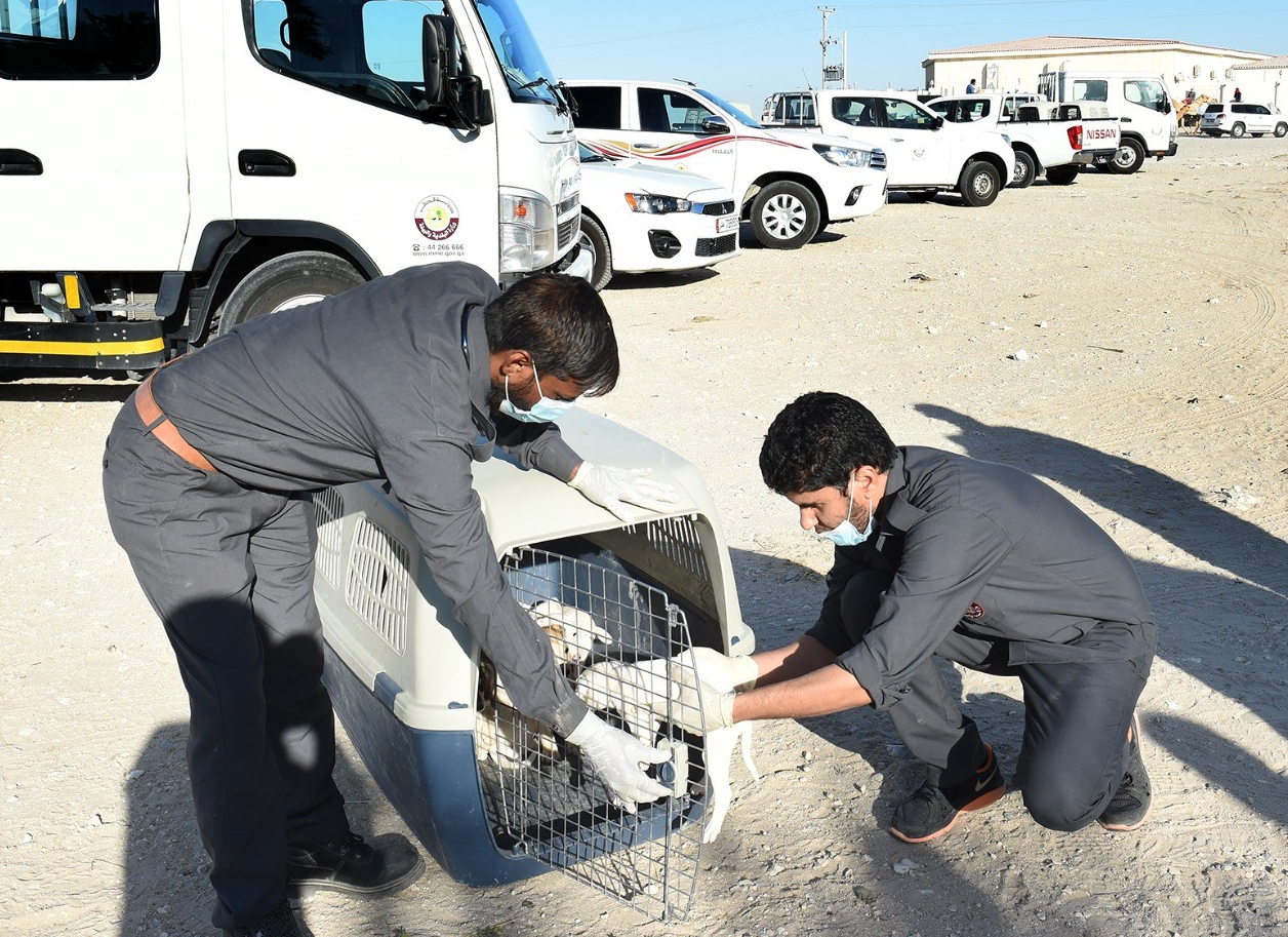 """""""Rifq"""" campaign continues to rehabilitate stray dogs"""