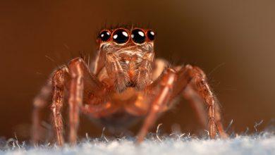 Warning of killer spiders sweeping Sydney
