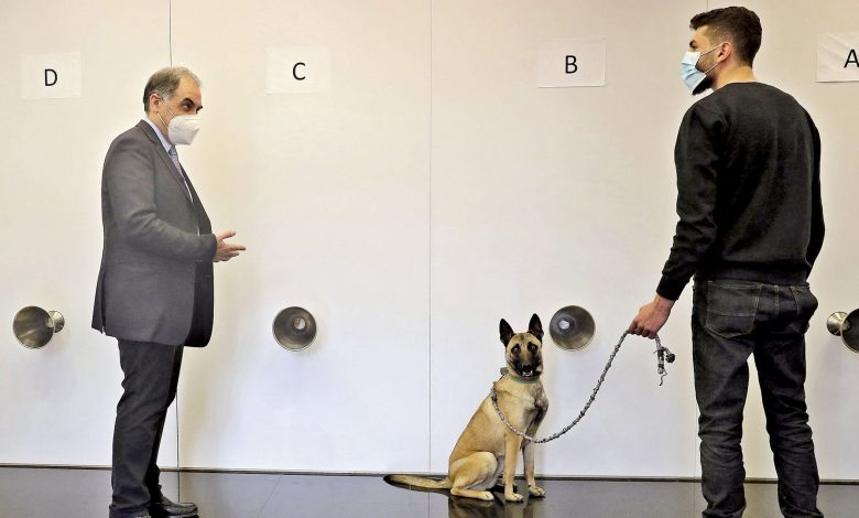 Lebanese doctor's drive to curb COVID-19 with sniffer dogs