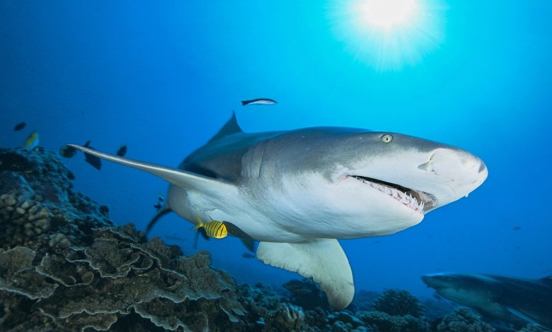 'Godzilla' shark discovered in New Mexico gets formal name