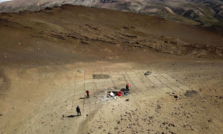 Dinosaur remains discovered amid world's driest desert