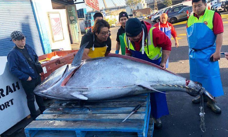 271-kg tuna caught off the coast of Australia