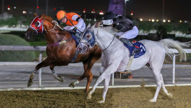 Qatar Racing and Equestrian Club to Hold Al Wakra Cup