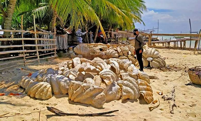Giant clam shells worth $25 million seized in Philippine raid