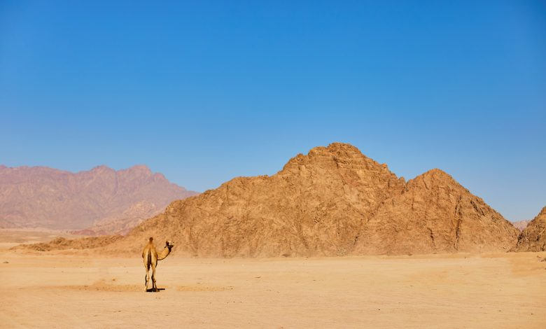 France's TF1: Qatar desert a new destination for tourism and entertainment