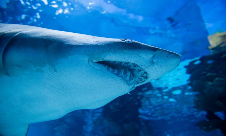 Electronic Devices to Deter Shark Attacks
