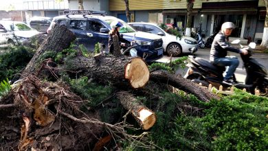 Eleven killed after extreme weather hits east China