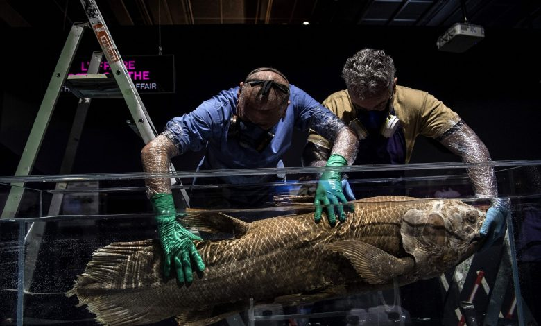 Fish With History Dating Back To 420 Million Years, Caught Alive