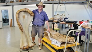 New dinosaur species discovered in Australia, one of world's biggest