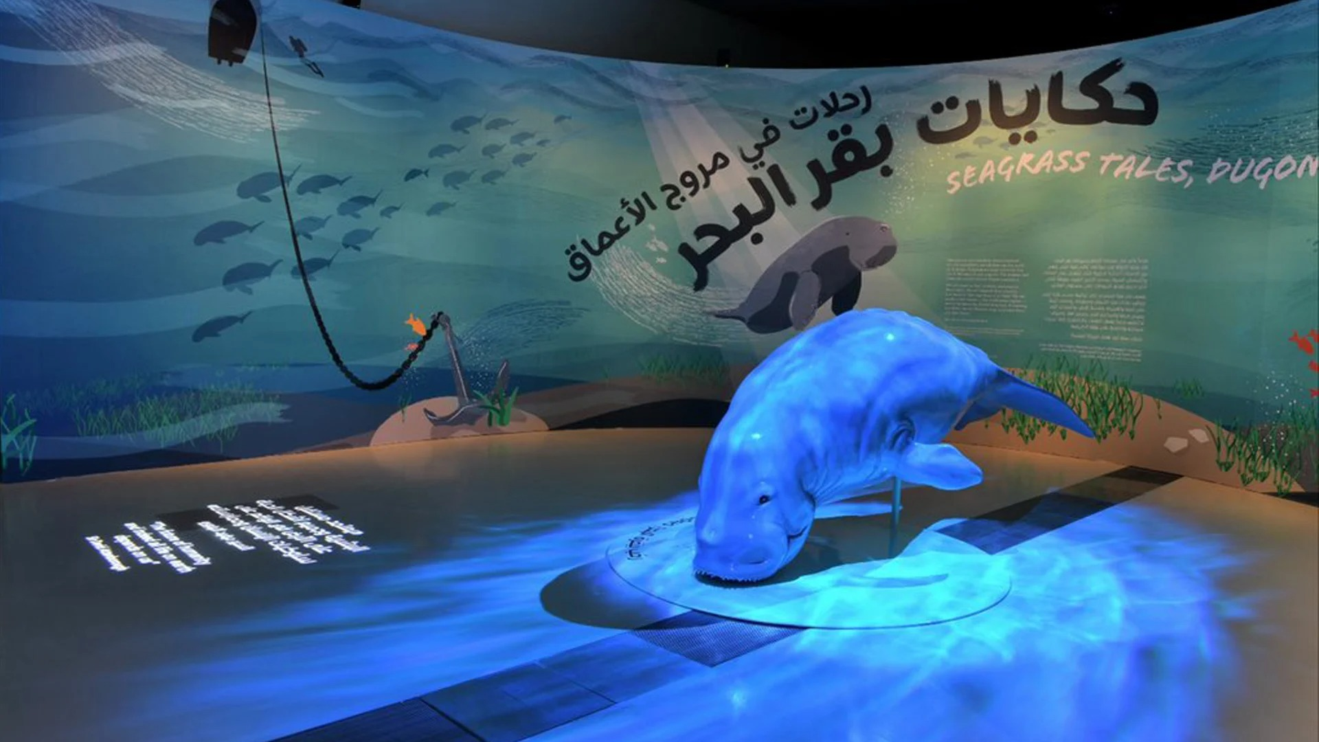 NMoQ Presents First Natural History Exhibition on Dugong