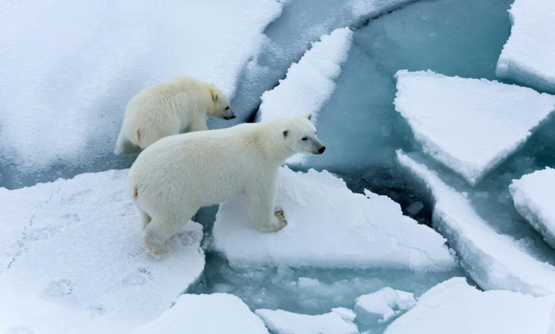 Arctic Sea Ice Thinning Up to Twice As Fast as Expected