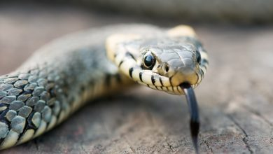 6 things that attract snakes to your home