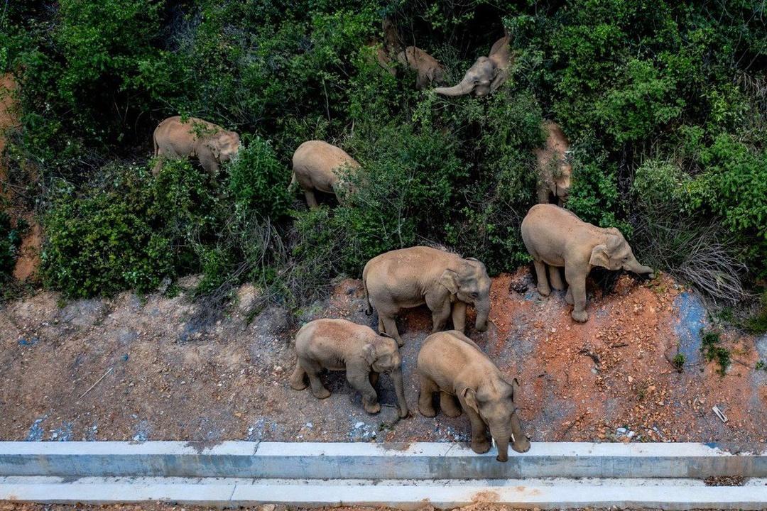 Herd of elephants Spreads terror in China's streets