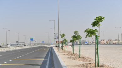Supervisory Committee plants over 4,400 trees along Al Shamal Road