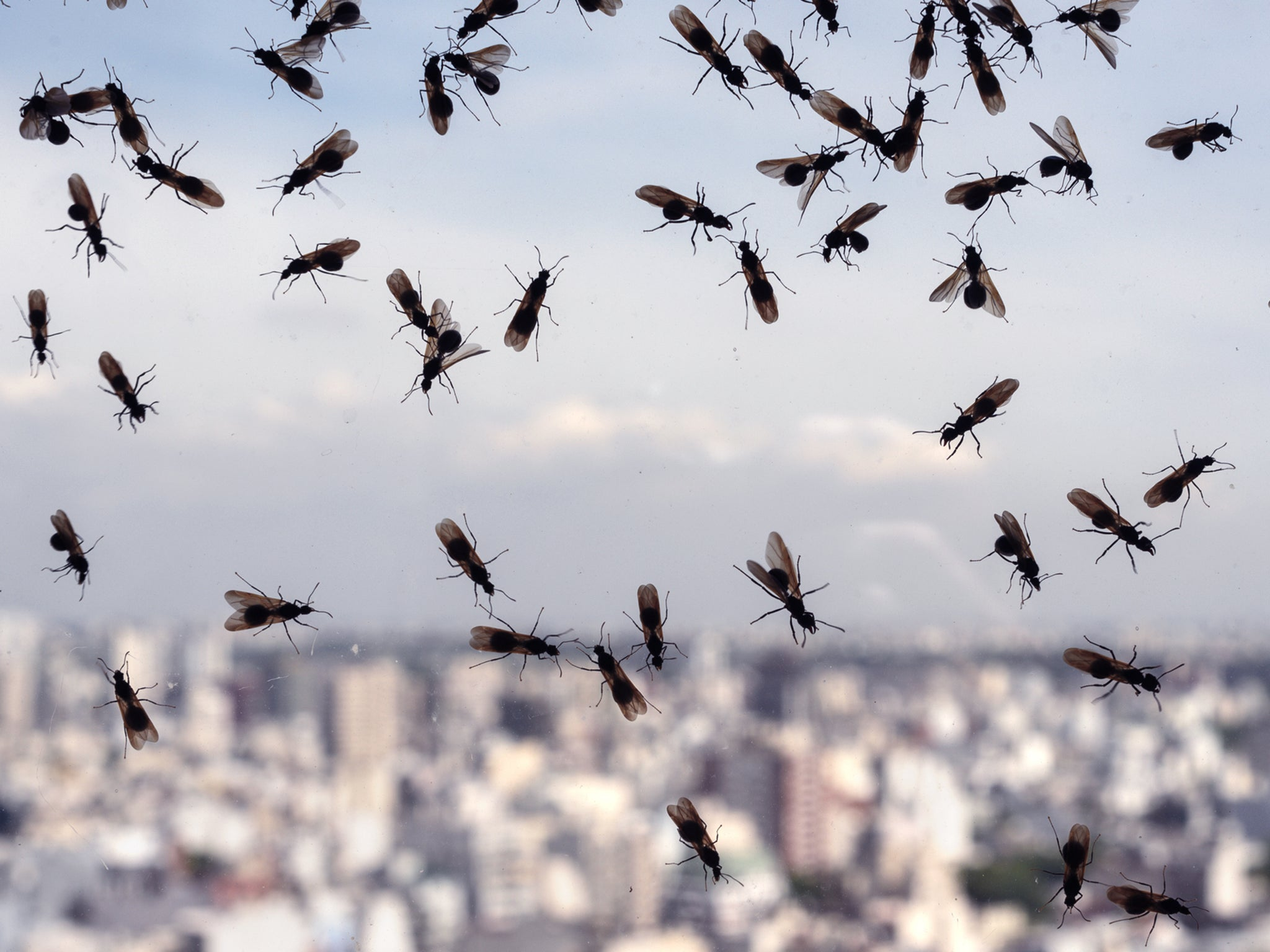 Flying ants could swarm to Wembley for Euro 2020 final