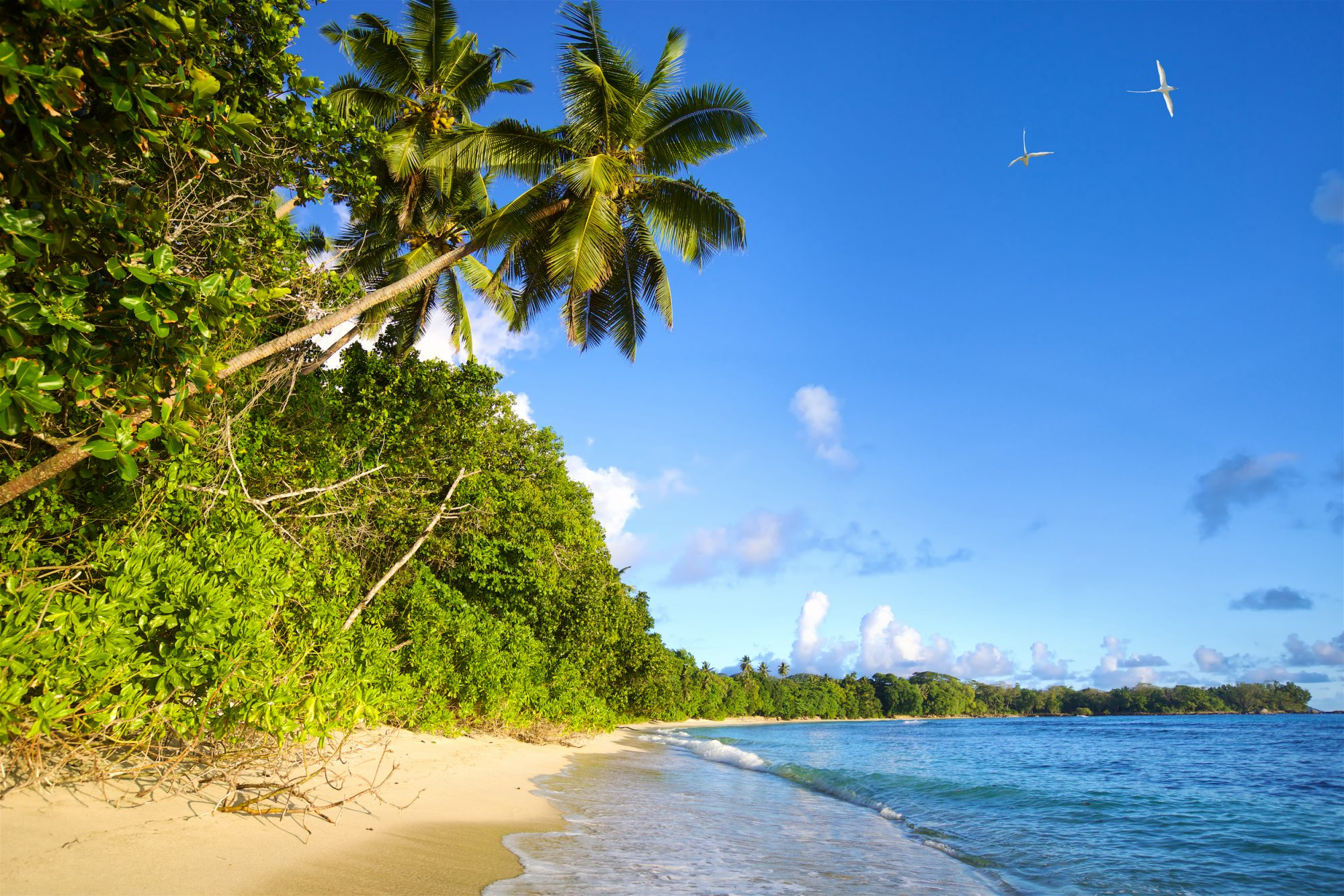 QA and Tourism Seychelles Launch Strategic Marketing Partnership