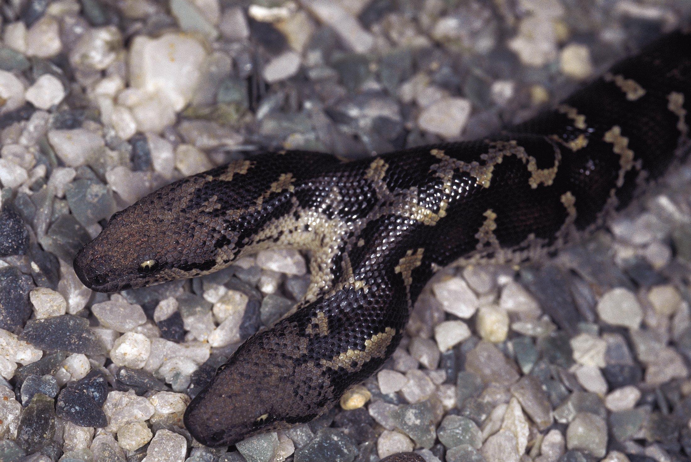 Rare double-headed snake born in Germany