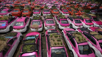 Thailand: Idle taxis used to grow food for out-of-work drivers