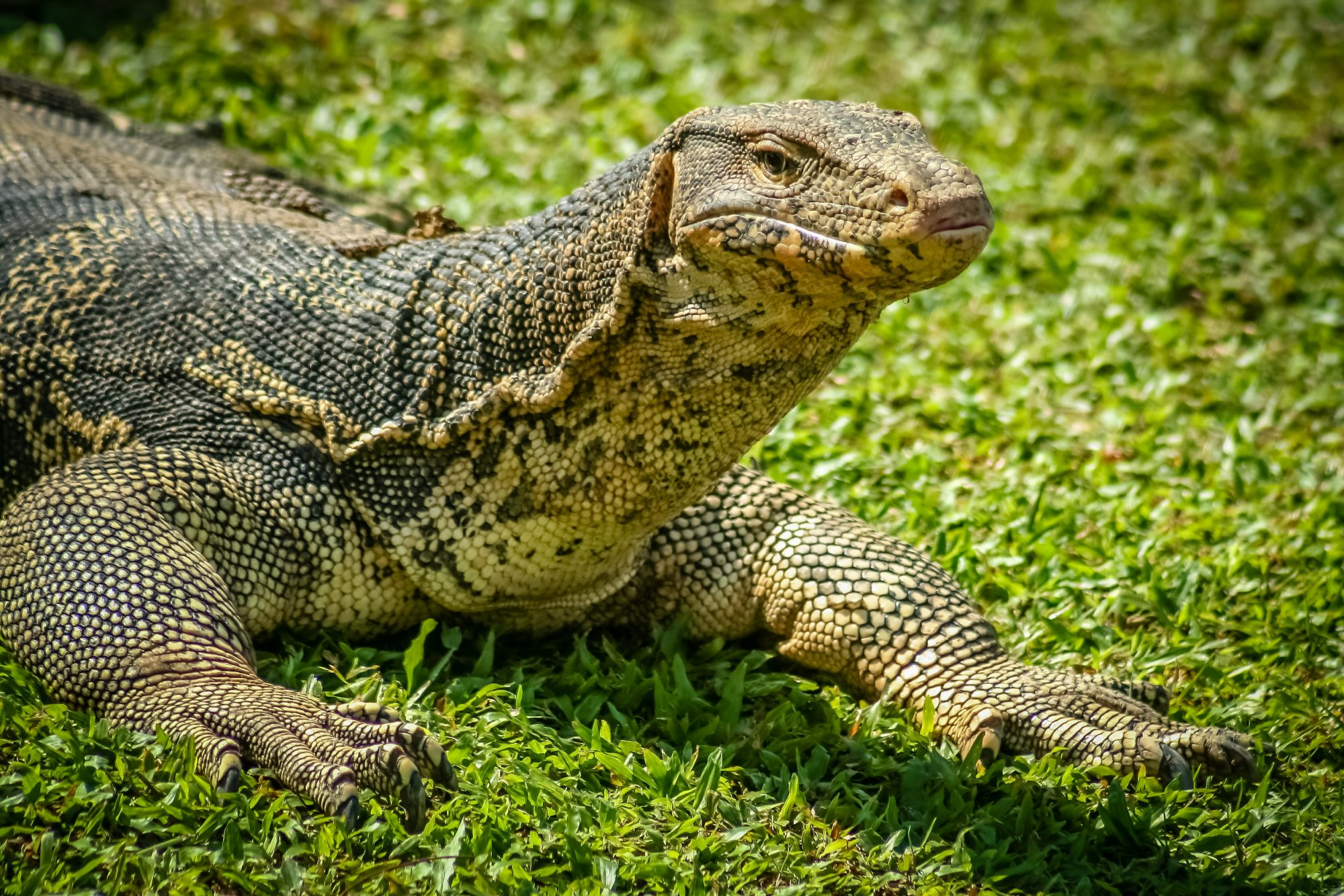 Climate Change Is Threatening Komodo Dragons