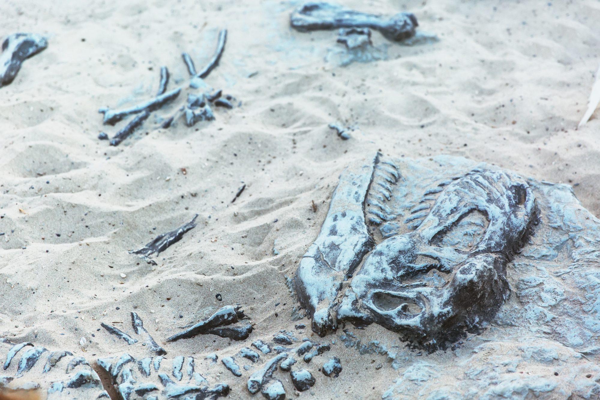Dinosaur skeleton found by resident in Libyan Sahara