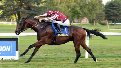 MARJAAN Wins Prix De lAdour for Beginner Thoroughbred Horse in France